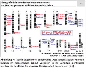 Abbildung: Eine große Zahl von Genvarianten determiniert ca. 10% des gesamten erblichen Herzinfarktrisikos